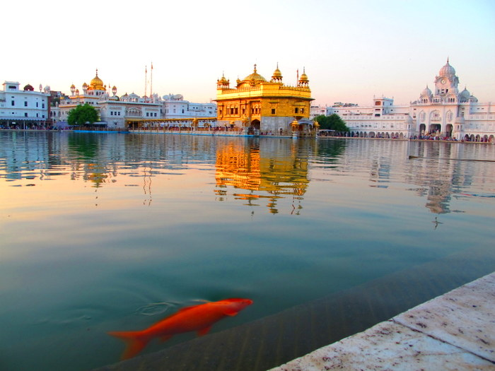 Amritsar, India Fish in the water at the Golden Temple