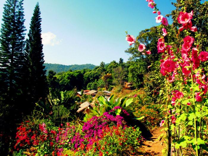 Beautiful flowers in Doi Pui Thialand